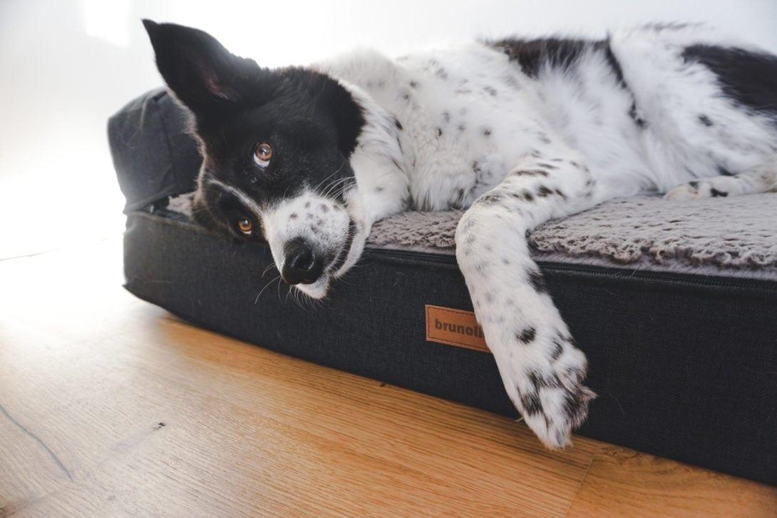 Orthopädisches Hundebett im Test Brunolie Erfahrungen