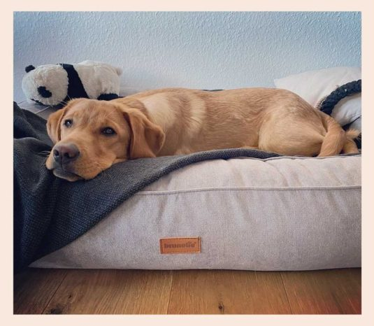 orthopädisches Hundebett Bruno von Brunolie, Foto von willkommen.in.unserer.welt
